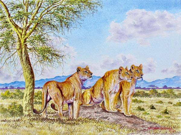 Painting - Lion Pack by Joseph Thiongo