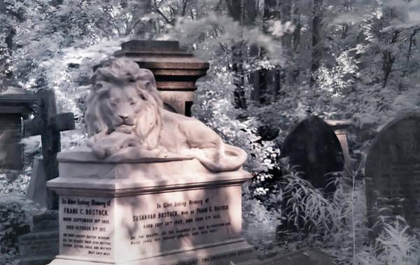 Photograph - Sleeping Lion by Helga Novelli