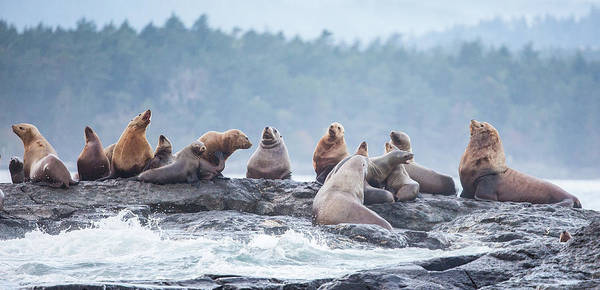 Photograph - Lion Rock  by Kevin Dietrich