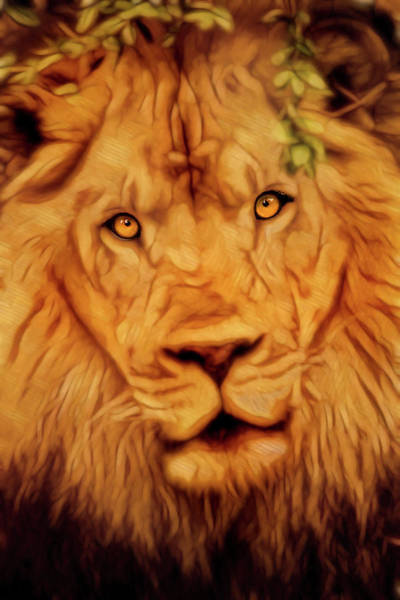 Photograph - Lion Stare-artistic by Don Johnson
