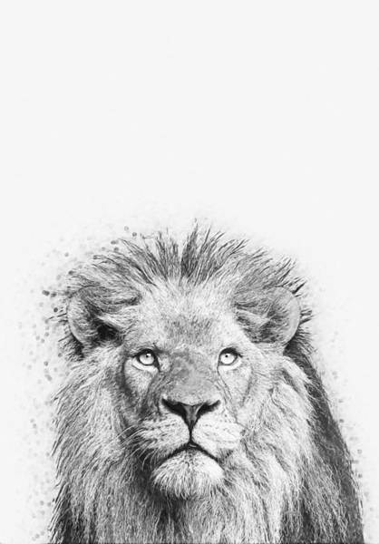 Puma Digital Art - Lion by Zapista Zapista