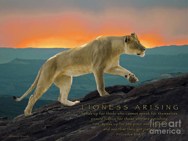 Wall Art - Photograph - Lioness Arising by Constance Woods