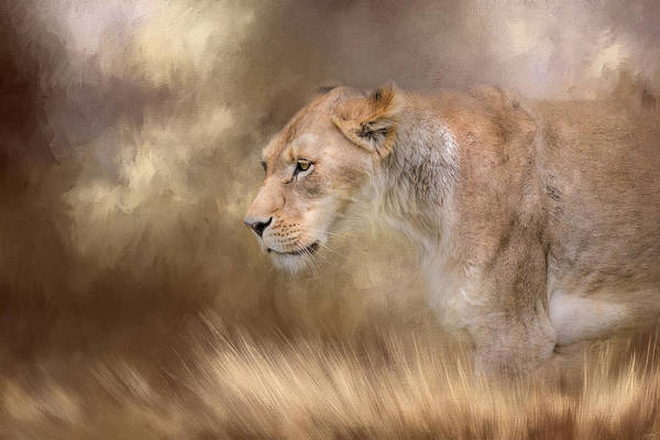 Photograph - Lioness In Spring by Jai Johnson