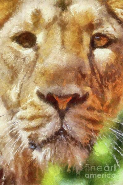 Wall Art - Painting - Lioness by Sarah Kirk