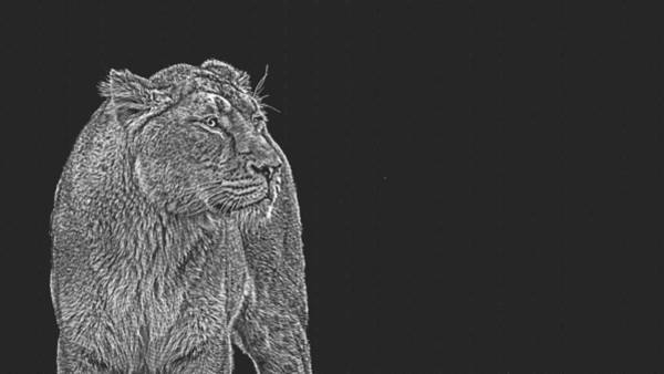 Uganda Painting - Lioness, The Queen by Celestial Images