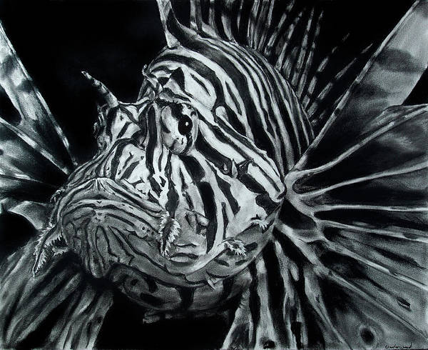 Drawing - Lionfish by William Underwood