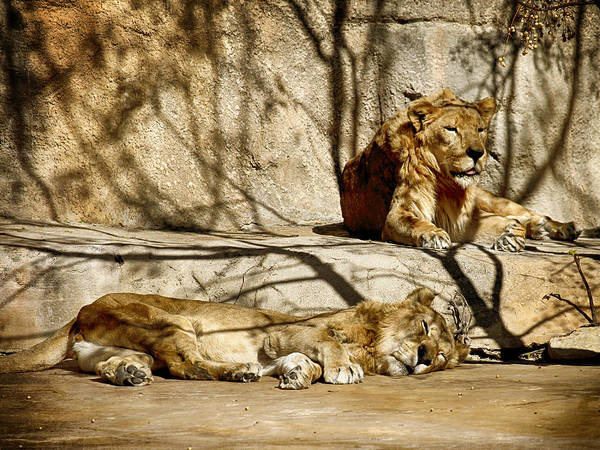 Photograph - Lions Den by Charles McKelroy