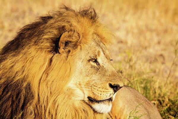 Photograph - Lions Head by Matt Cohen