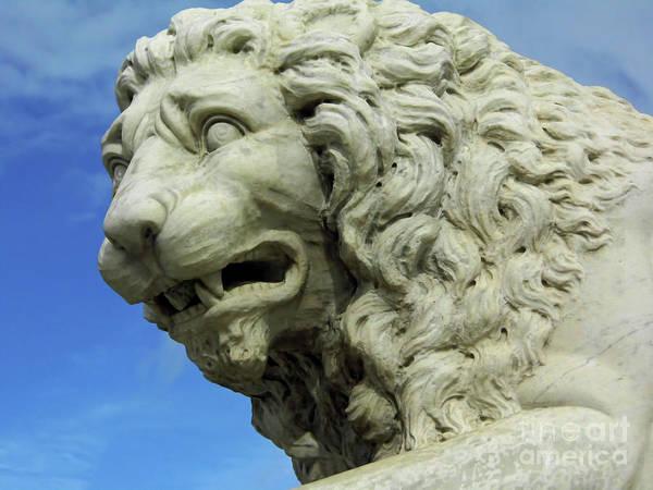 Photograph - Lions Roar by D Hackett