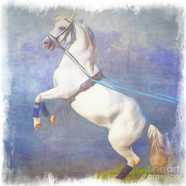 Photograph - Lipizzaner Stallion Square by Eleanor Abramson