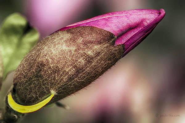 Photograph - ...lipstick.... by Paul Vitko