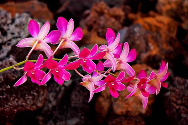 Mixed Media - Liquid Orchids by Pamela Walton