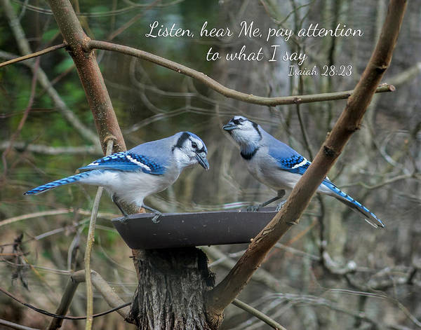Photograph - Listen,  Blue Jays With Scripture by Denise Beverly