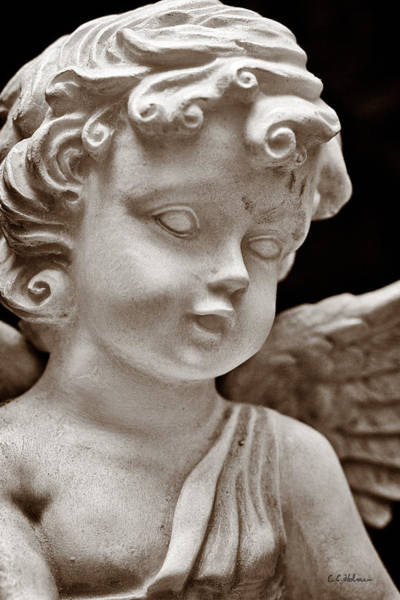 Photograph - Little Angel - Sepia by Christopher Holmes