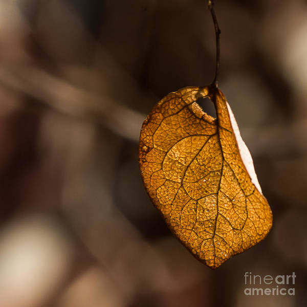 Photograph - Little Autumn Leaf by Alissa Beth Photography