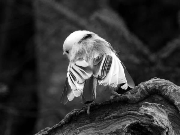 Photograph - Little Ballerina by Zinvolle Art