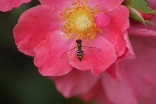 Wall Art - Photograph - Little Bee by Heather Green