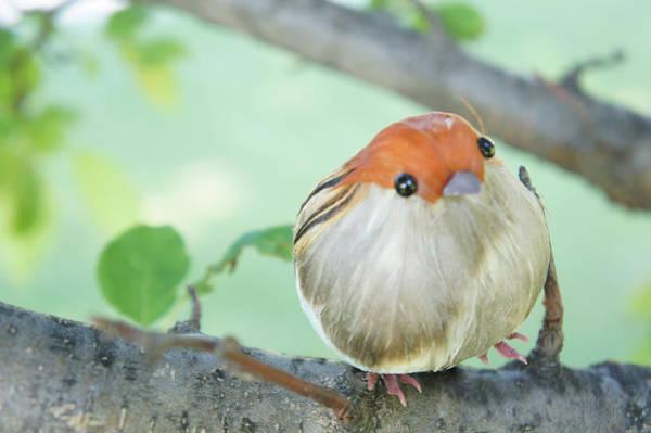 Wall Art - Photograph - Little Bird 1 by Art Spectrum