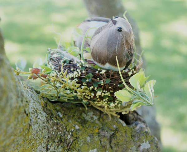Wall Art - Photograph - Little Bird 3 by Art Spectrum