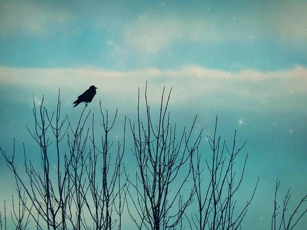 Wall Art - Photograph - Little Bird In A Soft Blue Sky by Gothicrow Images
