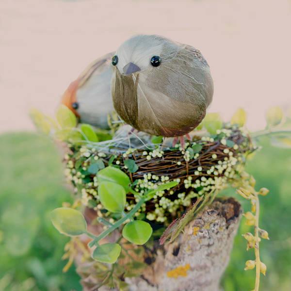 Wall Art - Photograph - Little Birds 3 by Art Spectrum