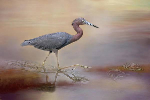 Little Blue Heron Photograph - Little Blue Heron by Donna Kennedy