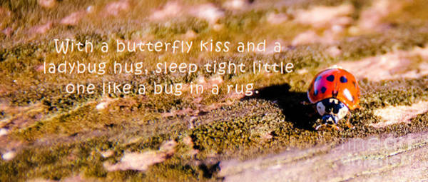 Photograph - Little Bug by Andrea Anderegg