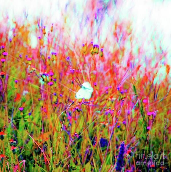 Wall Art - Photograph - Little Butterfly Fly by D Davila