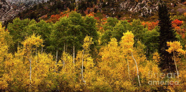 Photograph - Little Cottonwood Canyon Utah by David Millenheft