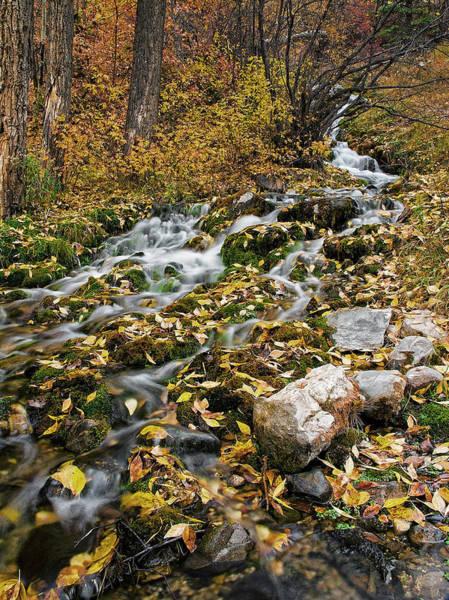 Photograph - Little Creek by Scott Read