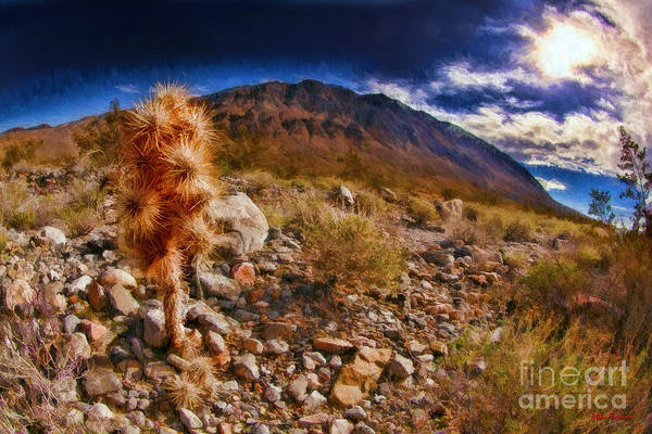 Photograph - Little Death Valley Cactus by Blake Richards