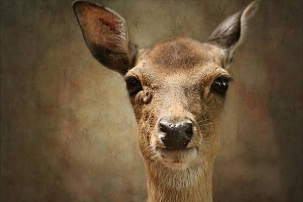 Bambi Mixed Media - Little Deer by Heike Hultsch
