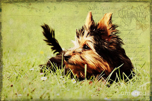 Photograph - Little Dog by Angela Doelling AD DESIGN Photo and PhotoArt
