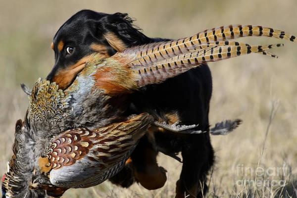Wall Art - Photograph - Little Dog Big Bird 2 by Chip Laughton