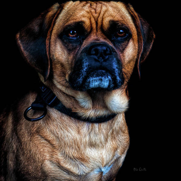 Photograph - Little Dog Big Heart by Bob Orsillo