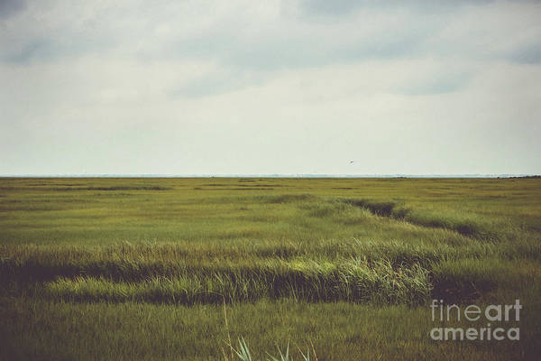 Wall Art - Photograph - Little Egg Wetlands  by Colleen Kammerer