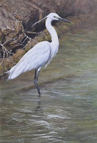 Painting - Little Egret by Alan M Hunt