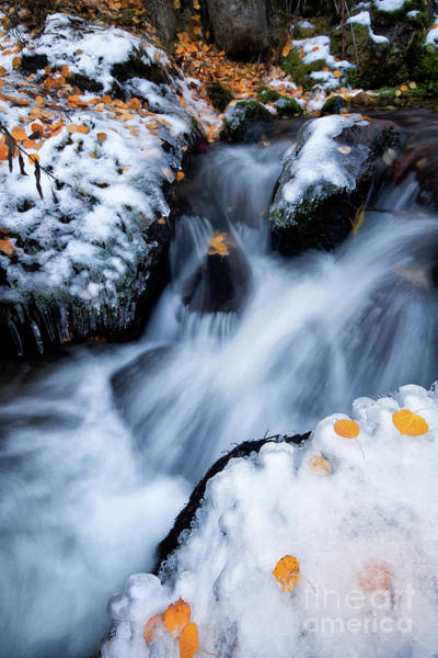 Wall Art - Photograph - Little Fall, Little Winter On Boulder Creek by Ronda Kimbrow