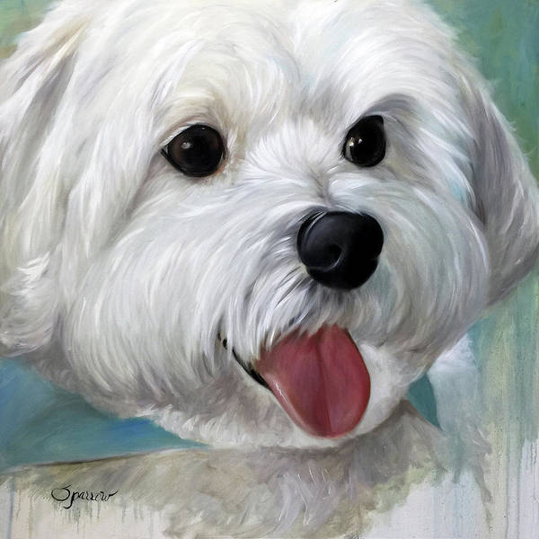 Maltipoo Wall Art - Painting - Little Gally by Mary Sparrow