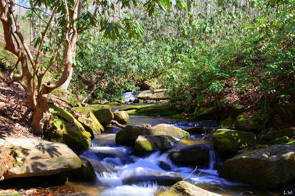 Photograph - Little Gap Creek 2 by Lisa Wooten