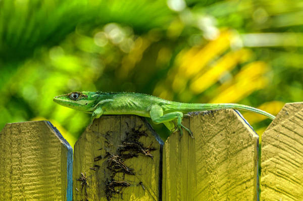Photograph - Little Green Visitor by Wolfgang Stocker