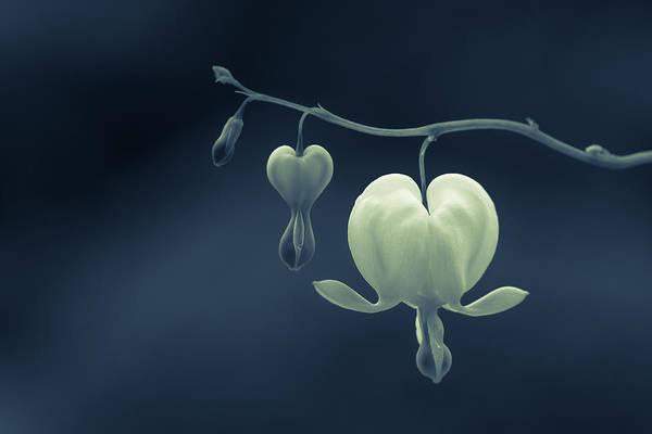 Floristry Photograph - Little Hearts by Silke Tuexen