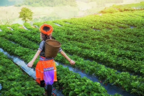 Strawberry Hills Wall Art - Photograph - Little Hill Tribe Farmer Standing At Strawberry Field Farm by Anek Suwannaphoom