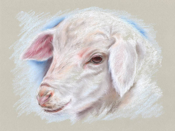 Pastel - Little Lamb by MM Anderson