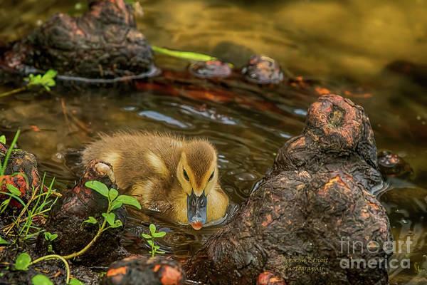Photograph - Little Nature Gem by Deborah Benoit