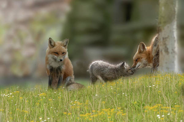 Photograph - Little Nose Rub With Mom by Dan Friend