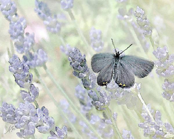 Butterfly On Flower Digital Art - Little On Lavender by Anita Faye