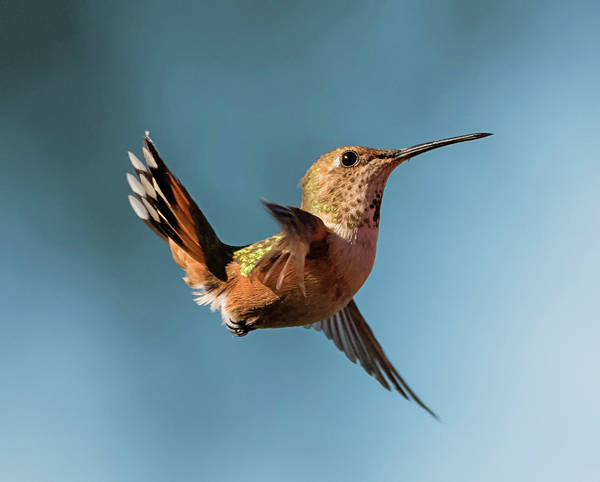 Photograph - Little Orange Acrobat by Loree Johnson