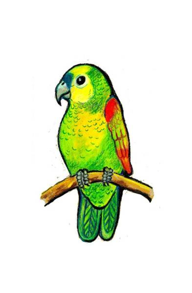 Green Parrot Drawing - Little Parrot On A Branch. by Eliza Firanci