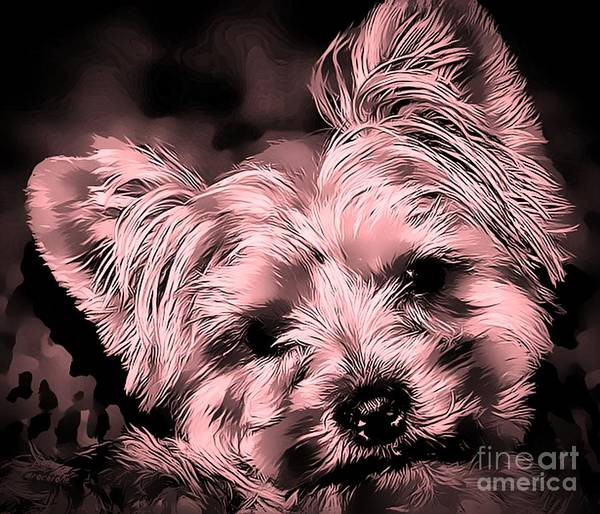 Photograph - Little Powder Puff by Kathy Tarochione